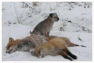 Sixten med sina 2 rävar