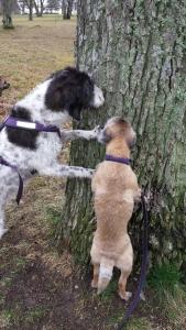 Godisträd i roliga träd :-)